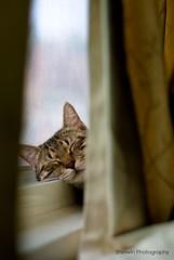 (Sherwin_andante) Tags: window cat 2008 toro 貓 fa50 mywinners k10d kissablekat bestofcats 200804 龍二 8prettykittycomments 10prettykittycomments 5prettykittycommentsparti 2008mychoice 2008myfav