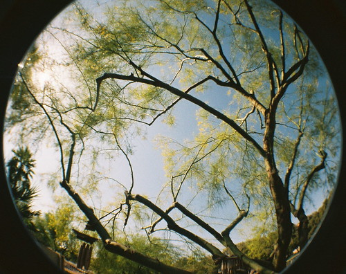 Fisheye fun