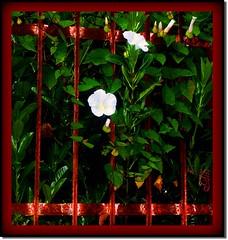 Cancellata rossa (acqua1951) Tags: verde picnik cancello campanule