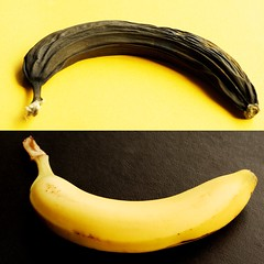 Happy banana, sad banana (Pragmagraphr) Tags: new old black yellow fruit contrast square diptych dry banana fresh inverted squarecrop nikkor50mmf18d explored d80