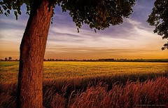 Homegrown (Gert van Duinen) Tags: sunset germany landscape countryside interestingness sundown riverside digitalart explore landschaft tranquil landschap emsland fpg dutchartist twtmeiconoftheday landschaftsaufnahme gertvanduinen