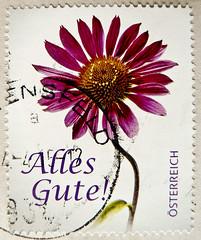 "great stamp Austria € 62c ""Alles Gute"" ""All The Best"" purple coneflower (Echinacea purpurea, Purpur Scheinsonnenhut, Röd solhatt, rudbeckia pourpre, rode zonnehoed, bíbor kasvirág, Эхина́цея пурпу́рная, ムラサキバレンギク, Jeżówka purpurowa) timbre Autriche selo (stampolina, thx for sending stamps! :)) Tags: rakousko austria österreich austrija avusturya østerrike ausztria オーストリア stamps stamp 切手 briefmarke briefmarken スタンプ postzegel zegel zegels марки टिकटों แสตมป์ znaczki 우표 frimærker frimärken frimerker 邮票 طوابع bollo francobollo francobolli bolli postes timbres sello sellos selo selos razítka γραμματόσημα bélyegek markica antspaudai маркица pulları tem perangko bíborkasvirág эхина́цеяпурпу́рная ムラサキバレンギク jeżówkapurpurowa sonnenhut blume flower echinacea rot rosa red fleur flora echinaceapurpurea roterscheinsonnenhut purpursonnenhut rödsolhatt rudbeckiapourpre rodezonnehoed"