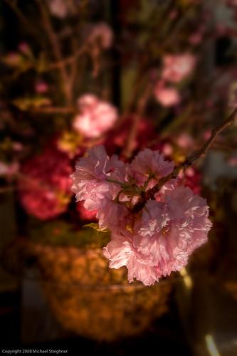 Cherry blossum detail 3