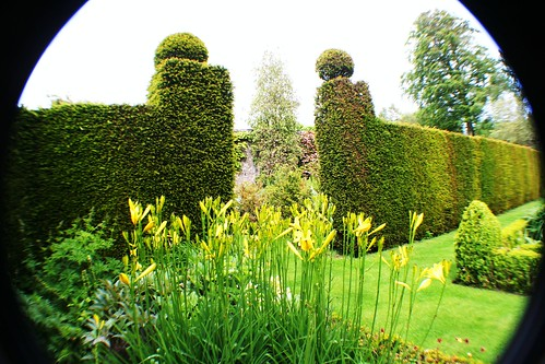 Hemerocallis and Topiary