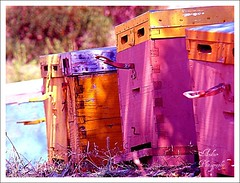 Beehives in pink (andzer) Tags: pink sea vacation orange yellow fun gulf scout andreas best bee explore greece macedonia thessaloniki beehive salonica chalkidiki sithonia  zervas  andzer   wwwandzergr