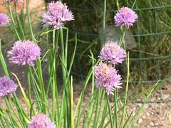 ortobotanico 306 (blum1) Tags: alberi fiori piante ortobotanico