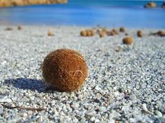 Marzellinu (Alisem Lechamp) Tags: sardegna sea beach mare sardinia spiaggia calaliberotto macrophotosnolimits