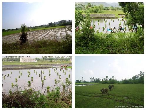 green field 2