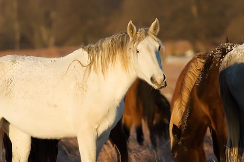 Feeding Horses 156