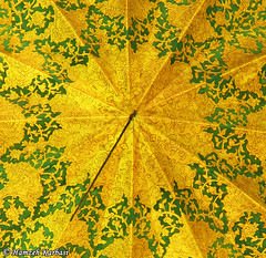 Happy birthday, Dear Elias (Hamzeh Karbasi) Tags: birthday old art architecture happy persian flickr iran elias ceiling historic explore iranian  esfahan oldcity isfahan          hamzeh  emamzadeh karbasi hamzehkarbasi   ismaeel esmaeel pirasteh    flickrexplore135