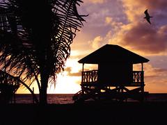 Sunrise at south beach - Key Biscayne (Nino H) Tags: ocean park usa tree beach nature silhouette soleil key florida miami south palm arbre plage palmier sunirse crandon bisayne goldenphotographer