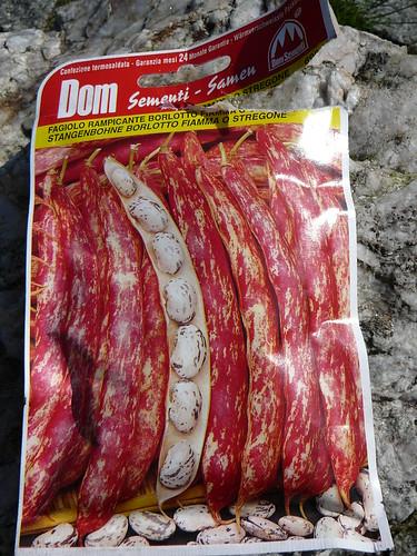 Samentüte Bohnen
