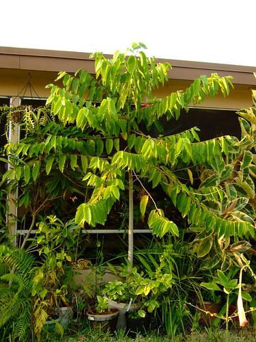 garden april 21, 2008 001