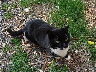 gary-scott's-cat