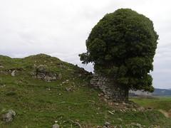 Auchan Castle ruins
