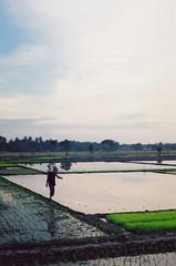 walking in between (C H A N T Y A) Tags: sky field canon indonesia 1 skies paddy program jogjakarta ae sawah bantul