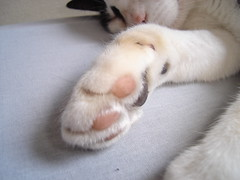 Mozinha (Iarima Red) Tags: gatos preta animais