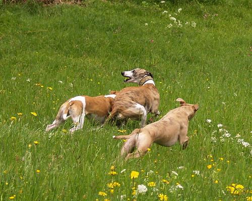 Coco, Joey und Nisha in der Windau