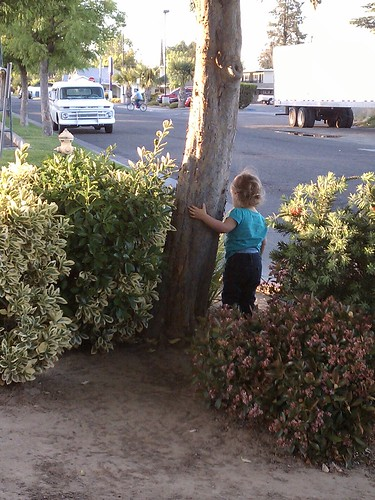 Watching traffic/hugging another tree