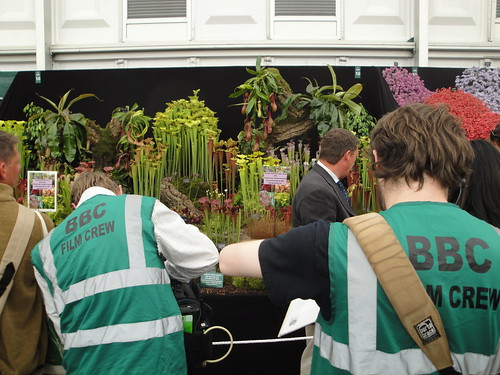 BBC film crew with Carnivorous plants