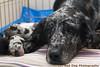 Mama and pups copy