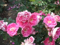 P4290082.JPG (Gail Chris Spinks) Tags: florafauna