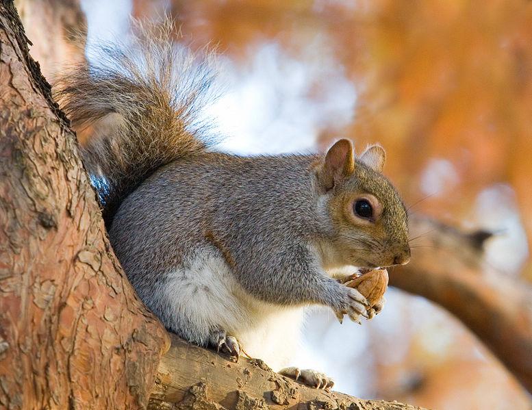 squirrelz.jpg