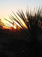IMG_2062 (jrdnz) Tags: arizona tucson saguaronationalpark