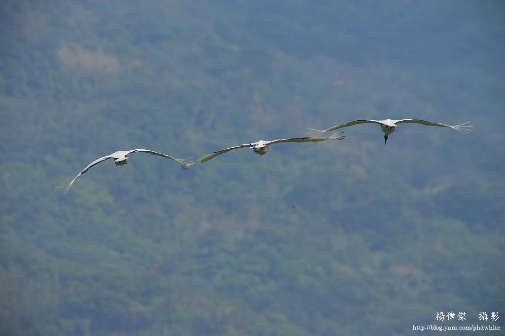 running_flying14