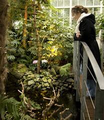 Mlancolie (Erminig Gwenn) Tags: schnbrunn vienna flower tree fleur plante garden austria palm botanic vienne autriche flore palmenhaus serre palmeraie vgtation