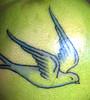 birdcolors