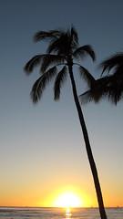 IMG_5284 (superstar pup) Tags: sunset hawaii oahu waikikibeach