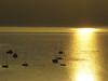 galicia de oro x (-Merce-) Tags: españa seascape sunrise catchycolors geotagged gold spain coruña paisaje galicia amanecer seashore lanscape oro sada catchycolorsgold mmbmrs ríadebetanzos geo:lat=4336288305223425 geo:lon=8242157321438825 eligeetucolor