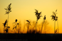 """2008_366044 - Grasses • <a style=""""font-size:0.8em;"""" href=""""http://www.flickr.com/photos/84668659@N00/2263412668/"""" target=""""_blank"""">View on Flickr</a>"""