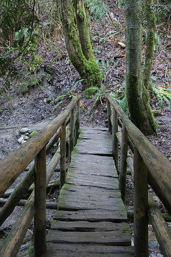 Bridge at Coal Creek Falls - Cougar Mountain - Issaquah
