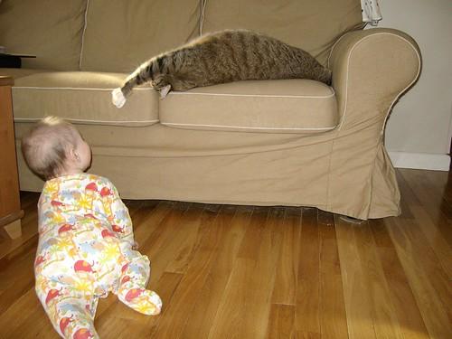 baby vs. cat 1