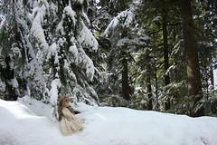 DSC01298.jpgMt. Rainier doll 3-08 (portugita_norton) Tags: snow washington doll mtrainier livingdoll