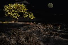 Full Moon (dbullens) Tags: moon tree night photoshop florida surreal islamorada floridakeys annesbeach wowiekazowie