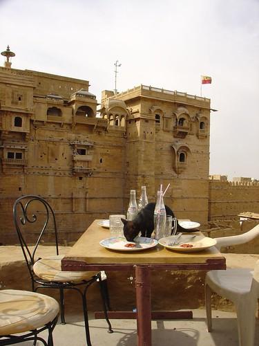 Cat at Restaurant Jaisalmer fort