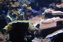 Fishes Iscariot (Gasdisaster) Tags: fish berlin water animal animals acquarium garten zoologischer