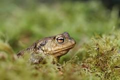 frog / explore (bilska.anna) Tags: