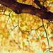 Autumn's whisper