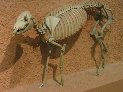 Flickr photos tagged mesohippus | Picssr