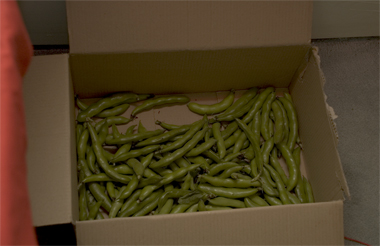 box of broad beans