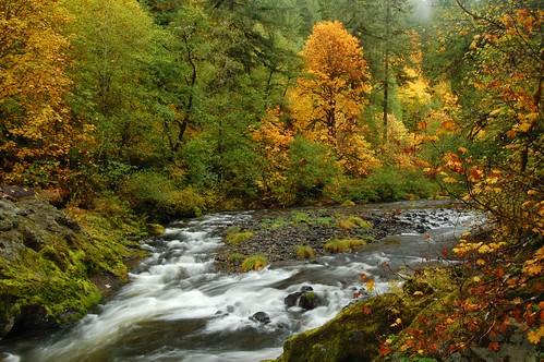 Maples at Fall Creek