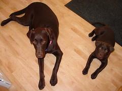 Dakota and Cheyenne waiting for cookie