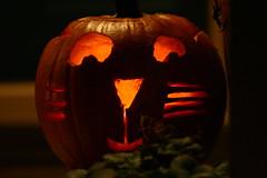 Morgan's pumpkin