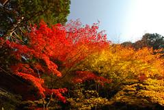 (whc7294) Tags: autumn vivid  soe naturesfinest amazingtalent 10faves onlyyourbestshots diamondclassphotographer megashot superhearts  colourartaward artlegacy theperfectphotographer
