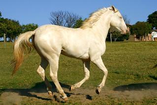 Horse - My Blu