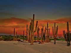 Walking on the Moon (oybay©) Tags: arizona cactus color colors photoshop saguaro smörgåsbord warmweather enmasse vistancia abigfave nosht superbmasterpiece simplyperfect brillianteyejewel overtheexcellence